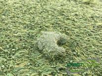 verklumpung-granulat